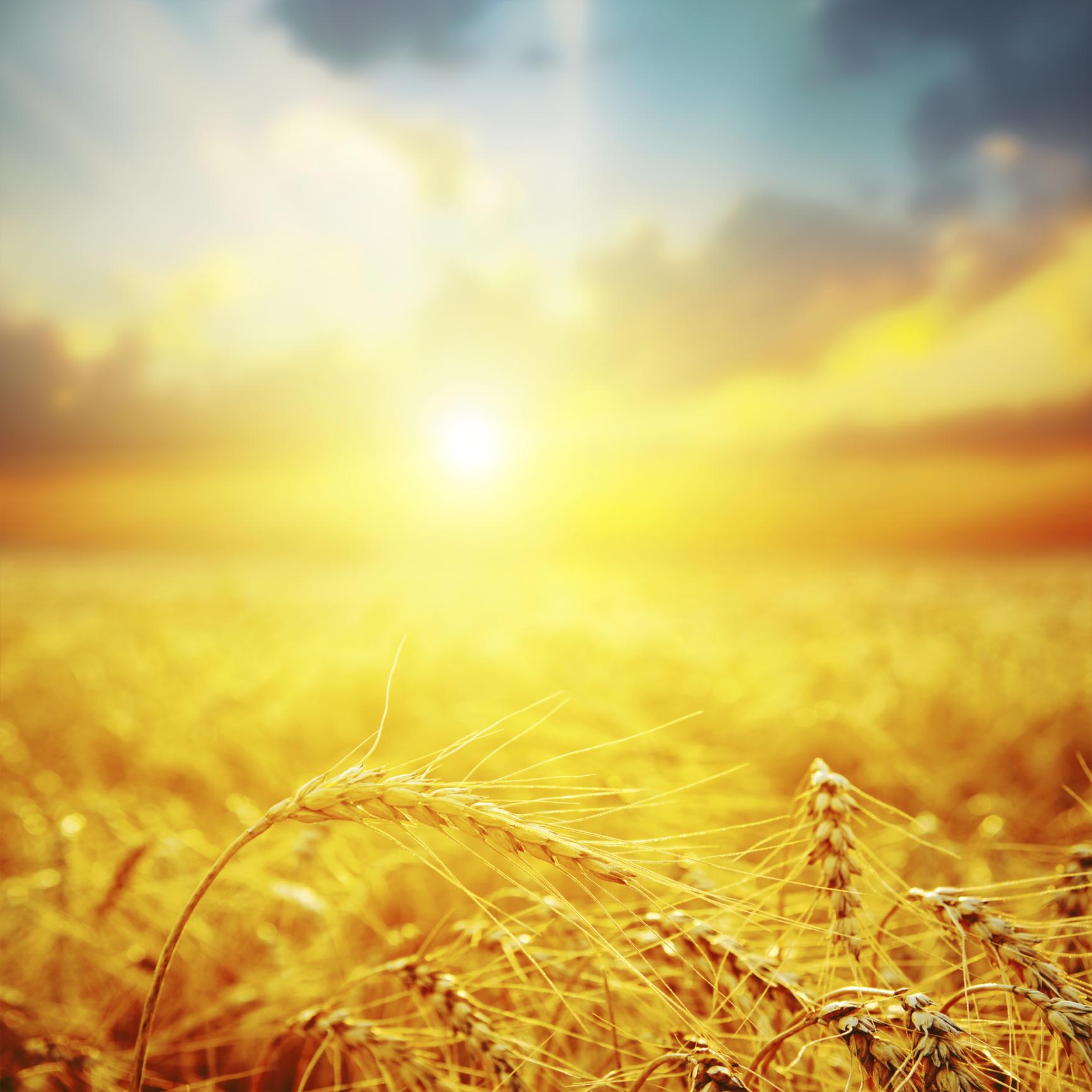 Ktg Agrar Se Aktie